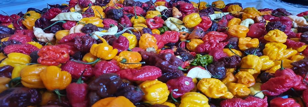 Fructele Pământului