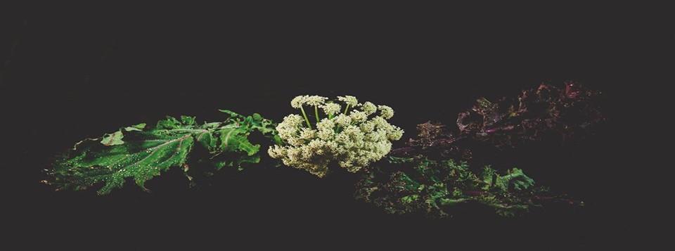 Grădina Corbilor